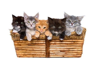 Halifax landlord tenant pets